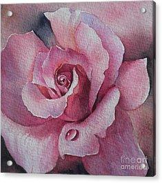 Lyndys Rose Acrylic Print by Sandra Phryce-Jones