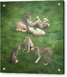 Lynx In The Mist Acrylic Print