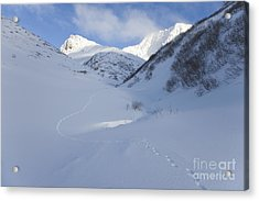Lynx Tracks In A Mountain Pass Acrylic Print by Tim Grams