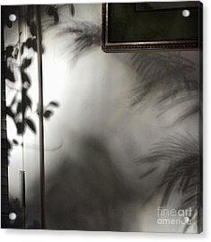 Lysiloma Shadows Acrylic Print by Kim Nelson