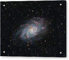 M33 - Triangulum Acrylic Print
