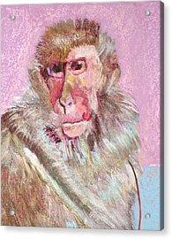 Macaque Acrylic Print
