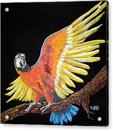 Macaw - Wingin' It Acrylic Print by Susan Kubes