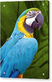 Macaw Acrylic Print by JAMART Photography