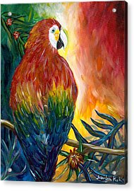 Macaw Acrylic Print by Jessilyn Park