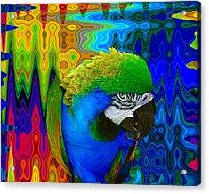 Macaw Madess Acrylic Print by Amanda Vouglas