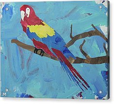 Acrylic Print featuring the painting Macaw by Candace Shrope