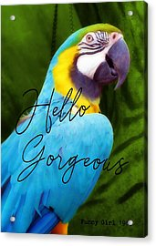 Macaw Quote Acrylic Print by JAMART Photography