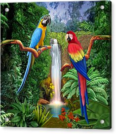 Macaw Tropical Parrots Acrylic Print
