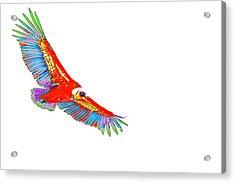 Macaw Vulture Acrylic Print