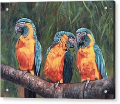 Macaws Acrylic Print by David Stribbling