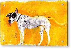 Mack The Pit/dalmatian Acrylic Print
