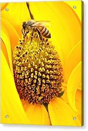 Macro Bee Acrylic Print