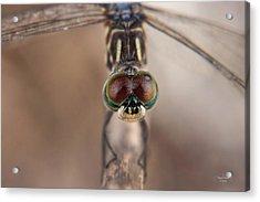 Macro Dragonfly Acrylic Print