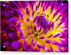 Macro Flora Acrylic Print
