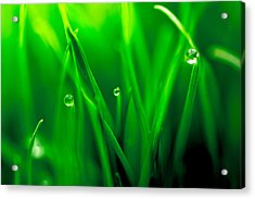 Macro Image Of Fresh Green Grass Acrylic Print by John Williams