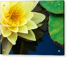 Macro Image Of Yellow Water Lilly Acrylic Print by John Williams