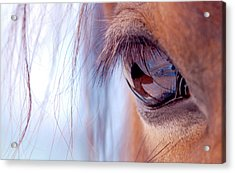 Macro Of Horse Eye Acrylic Print