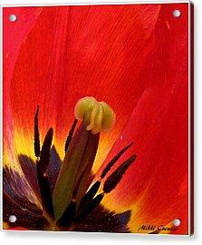 Macro Of Tulip Acrylic Print