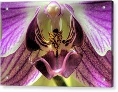 Macro Orchid Acrylic Print