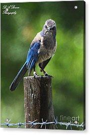 Mad Bird Acrylic Print
