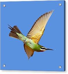 Madagascar Bee-eater T-shirt Acrylic Print