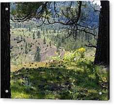 Acrylic Print featuring the photograph Made In The Shade by Ben Upham III