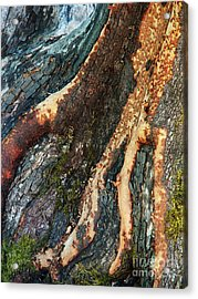 Madrone Fingers Acrylic Print