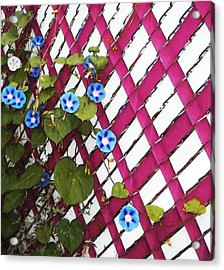 Acrylic Print featuring the photograph Magenta Chain-link by Shawna Rowe