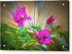 Magenta Magic Acrylic Print