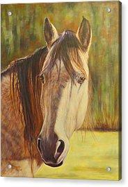 Maggie, Horse Portrait Acrylic Print