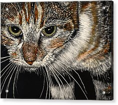 Maggie The Cat Acrylic Print by Robert Goudreau