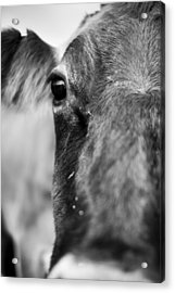 Maggie The Cow Abstract Acrylic Print by Dustin K Ryan