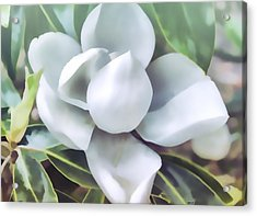 Magnolia Opening 2 Acrylic Print