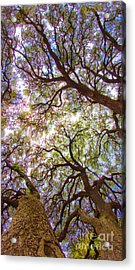 Magic Canopy Acrylic Print