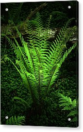 Magic Fern Acrylic Print by Svetlana Sewell
