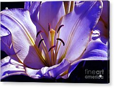 Acrylic Print featuring the photograph Magic Floral Poetry by Silva Wischeropp