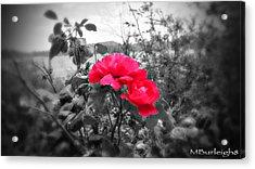 Magic Flower Acrylic Print by Michael Burleigh