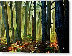 Magic Forest Acrylic Print