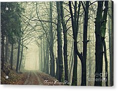 Magic Forrest Acrylic Print by Sacred  Muse