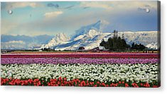 Magic Landscape 1 - Tulips Acrylic Print by Rick Lawler