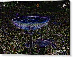 Magic Mushroom Acrylic Print by David Lee Thompson