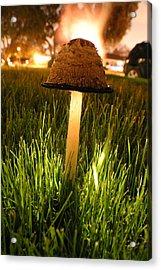 Magic Mushroom Acrylic Print by Jack Edjourian