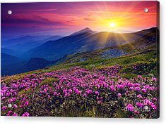 Magic Pink Rhododendron Flowers On Summer Mountain Acrylic Print by Caio Caldas