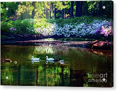 Magical Beauty At The Azalea Pond Acrylic Print