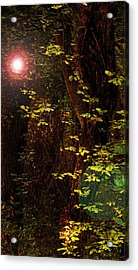 Magical Dark Woods Acrylic Print by Jean Booth