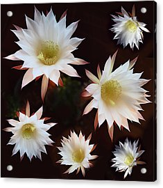 Acrylic Print featuring the photograph Magical Flower by Gina Dsgn