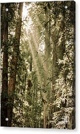 Magical Forest 2 Acrylic Print