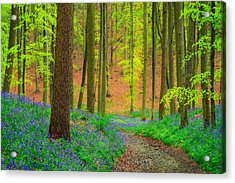 Acrylic Print featuring the photograph Magical Forest by Maciej Markiewicz