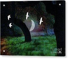 Magical Forest Night Acrylic Print by Robert Ball